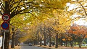 Hokkaido-Universität an der Herbstsaison stock footage