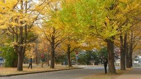 Hokkaido universitet på nedgångsäsongen arkivfilmer