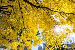 Hokkaido University at Autumn Season. Royalty Free Stock Photography