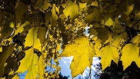 Hokkaido University at Autumn Season. Stock Image