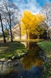 Hokkaido University at Autumn Season. Stock Images