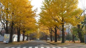 Hokkaido University at fall season stock video footage