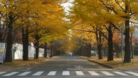 Hokkaido University at fall season stock footage