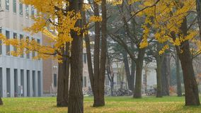 Hokkaido University at fall season stock video