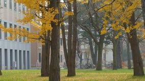 Hokkaido University at fall season stock video