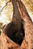 Hol in een oude boom Royalty-vrije Stock Foto's