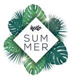 Hola cartel del verano Hojas del trópico con sol Fotos de archivo libres de regalías