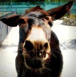 Hola de burro imágenes de archivo libres de regalías