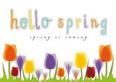 Hola el tulipán de la primavera, primavera está viniendo stock de ilustración