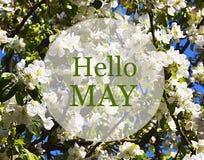 Hola la tarjeta de felicitación de mayo con el manzano blanco florece en un fondo del cielo azul Imagen de archivo