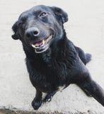 Hola perrito Imagen de archivo libre de regalías