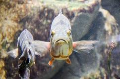 Hola, a pescado foto de archivo