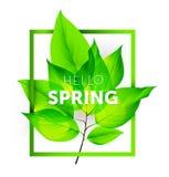 Hola primavera Imagenes de archivo