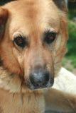 Hola, soy un perro imagenes de archivo
