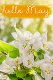Hola tarjeta de letras de mayo Fondo del resorte con las flores imagenes de archivo