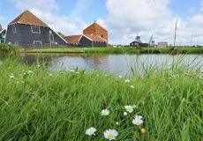 Holand Flowers and Windmills Stock Photo