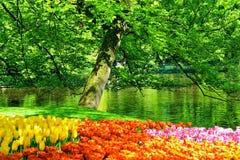 Holandia kwiaty Fotografia Royalty Free