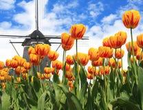 Holandia wiatraczek i tulipany Zdjęcia Stock