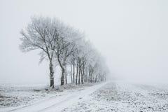 Holandie, krajobrazy i młyny w wintertime, obraz royalty free