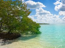 Holbox Island beach mangroove in Quintana Roo Stock Photography