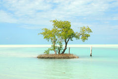 Holbox Island Caribbean Little Island Stock Images