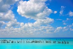 Holbox island in Mexico sea birds Royalty Free Stock Images