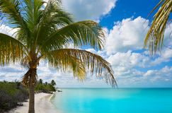 Holbox Island paradise beach palm tree Mexico Stock Photo