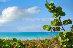 Holbox island tropical beach Mexico. Holbox island tropical beach in Mexico Royalty Free Stock Image