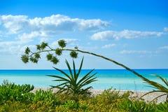 Holbox island tropical beach Mexico. Holbox island tropical beach in Mexico Stock Photography