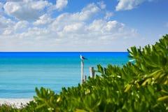 Holbox island tropical beach Mexico. Holbox island tropical beach in Mexico Stock Image