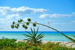 Holbox island tropical beach Mexico. Holbox island tropical beach in Mexico Royalty Free Stock Images