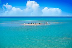 Holbox Island turquoise in Quintana Roo Mexico Royalty Free Stock Photo