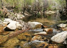 Holcomb Creek Royalty Free Stock Image