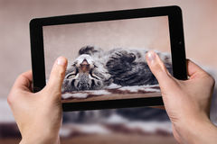 Hold black tablet on hands. Shooting home cat Stock Photography