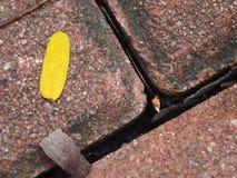 Hold between brick Stock Image