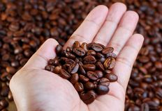 Hold Coffee Beans Royalty Free Stock Photos