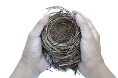 Hold nest Stock Photography