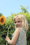 Hold a sun flower Royalty Free Stock Photography