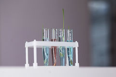 Holder with test tubes and plant them Stock Image