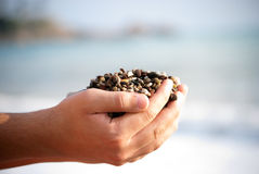 Holding. A close up of hands holding beach stones representing the beginning of something , summer, holidays ,  beautiful parts of planet earth or healthy life Royalty Free Stock Image