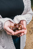 Holding acorns Stock Images