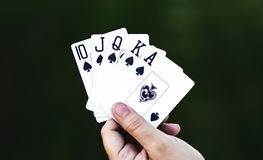 Holding All the Cards. Closeup shot of a human hand holding 5 playing cards between the thumb and forefinger spread apart enough to reveal a royal flush poker Royalty Free Stock Photos
