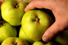 Holding an apple Stock Image