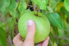 Holding an apple. Hand of a woman holding an apple Stock Photos