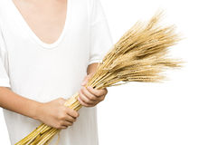 Holding barley Royalty Free Stock Photo