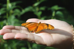 Holding Beauty. Butterfly in Hand Royalty Free Stock Photo