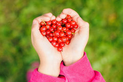 Holding berries in hands. Love. Food Royalty Free Stock Photography