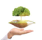 Holding big tree sprouting Stock Image
