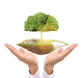 Holding big tree sprouting Royalty Free Stock Photos