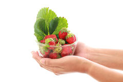 Holding bowl of fresh strawberries. Against white Stock Photography